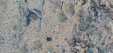 Updated Cape Mountain Leopard Sighting - 20.05.2017